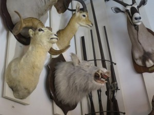 yams_Musée-Chasse-22y_1601