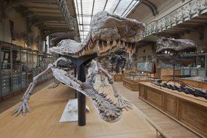 mnhn-galerie-paleontologie-bernard-faye