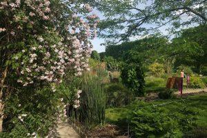 YAMS_Jardin-des-plantes_Jardin-botanique_mai17
